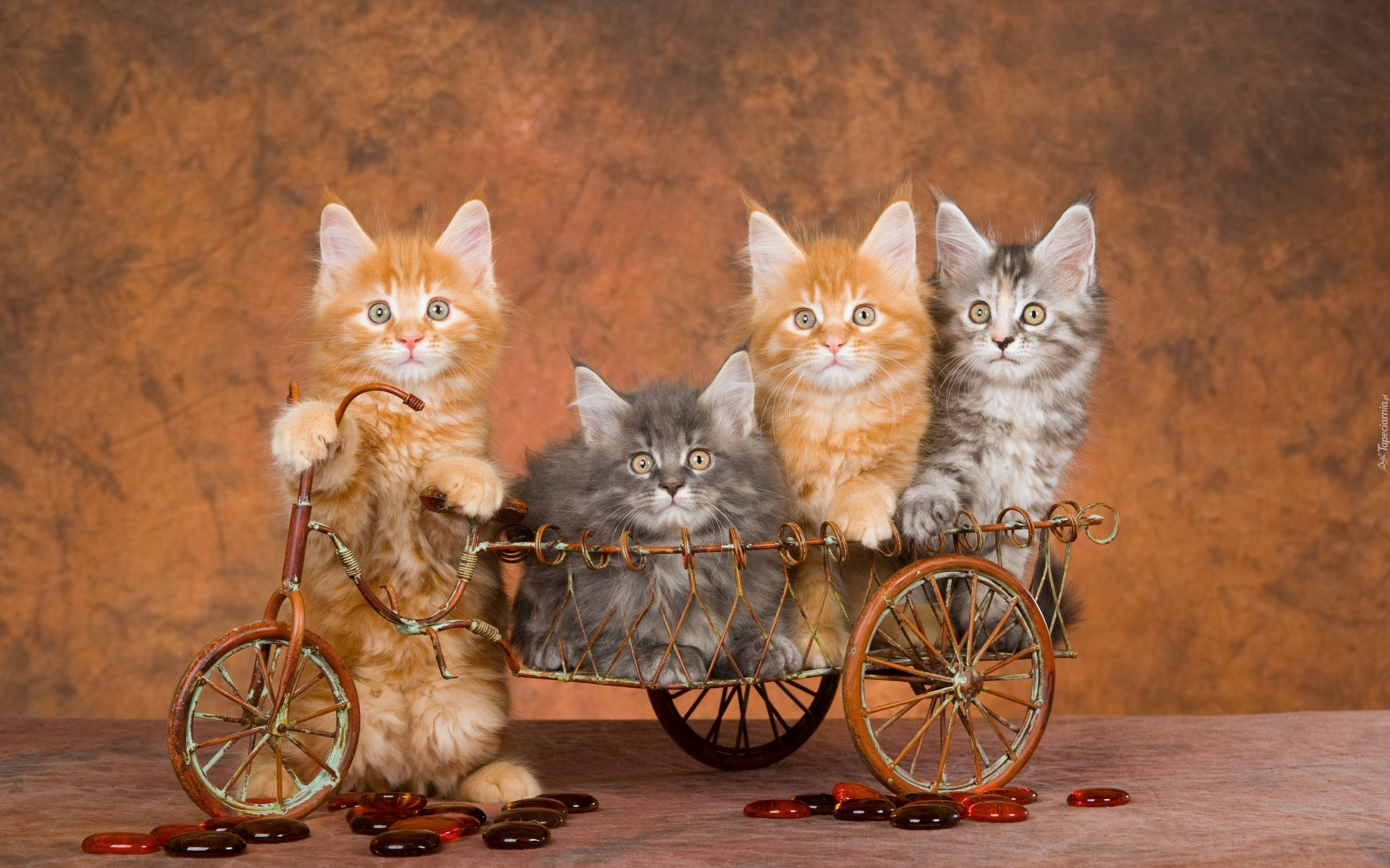 Christmas And Cats Pictures