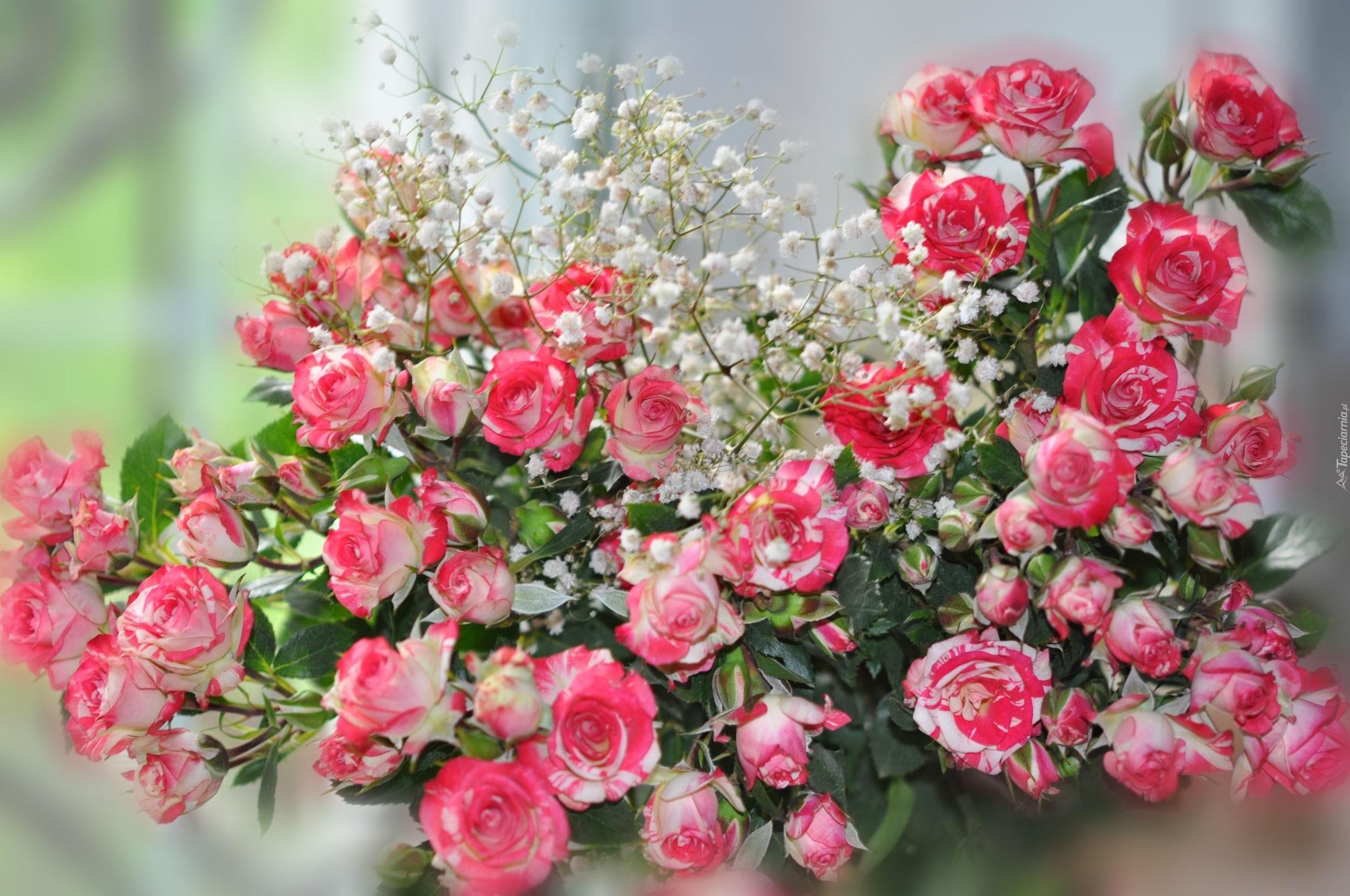 217095 bukiet rozowe roze