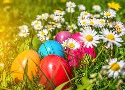 Jajka, Stokrotki, Łąka, Wielkanoc, Wiosna