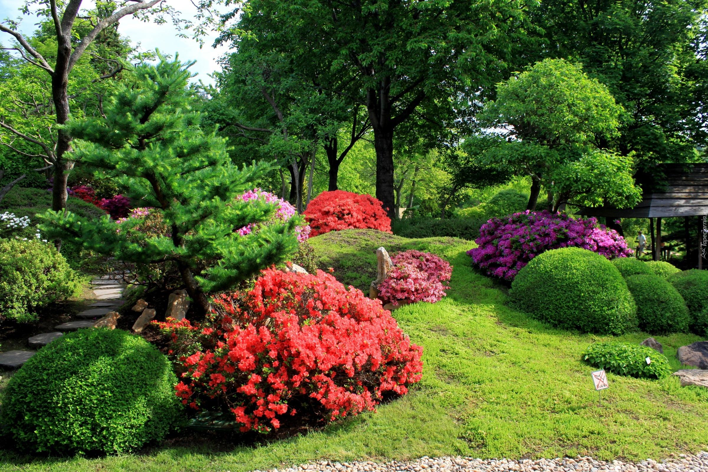 Ogród, Piękne, Kwitnące, Krzewy, Drzewa