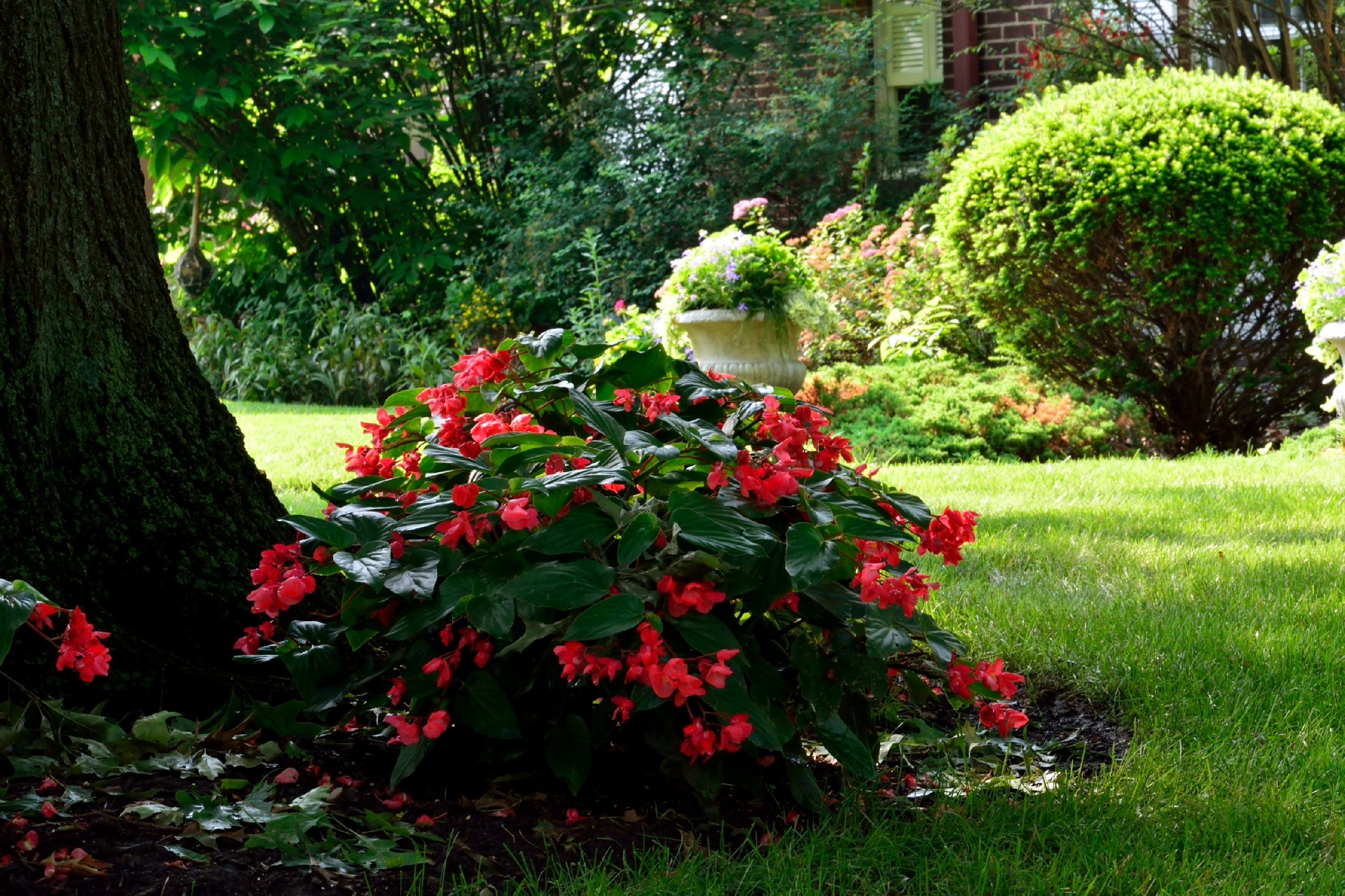 Ogród, Kwiaty, Krzewy, Drzewa